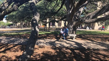 The Century Tree: An Aggie tradition rooted in love