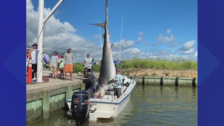 'I was shaking. I couldn't believe it' | Texas City fisherman reels in 12-foot, 1,000-pound tiger shark