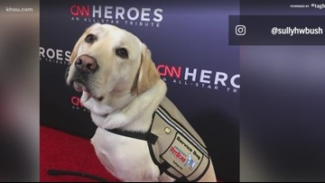 Sully the service dog honored with 2019 AKC Paw of Courage