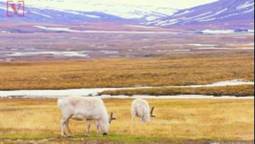Greenland 40 Degrees Warmer! Record Melting Increases