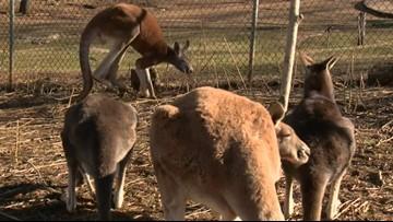 Adventure zoo raises more than $10K for Australia Zoo